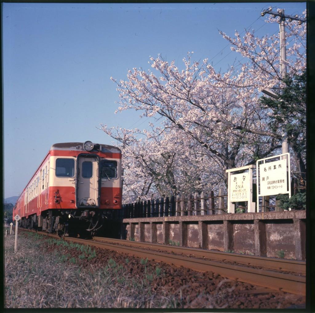 25満開の桜の下を